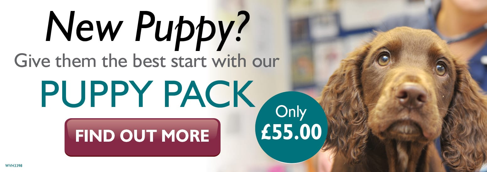 Puppy Pack covering puppy injections, flea & worm treatment, and much more for only £55 at Willows Veterinary Hospital in Hartford