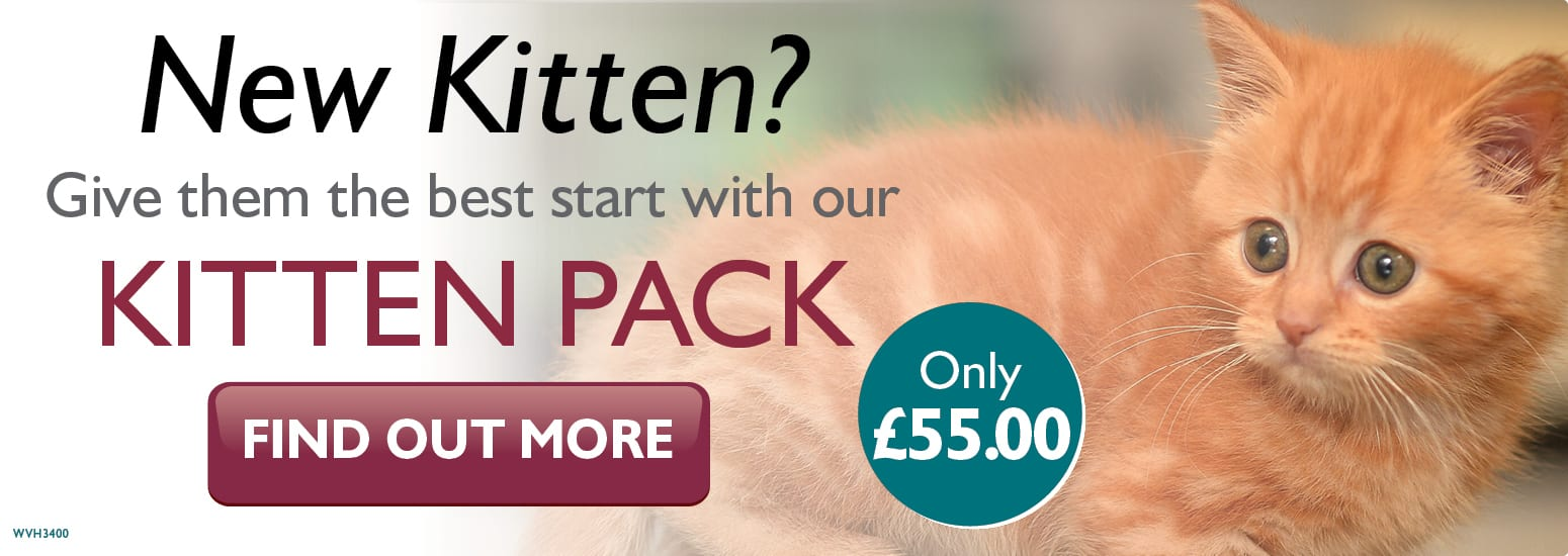 Kitten Pack covering kitten injections, flea & worm treatment, and much more for only £55 at vets in Hartford
